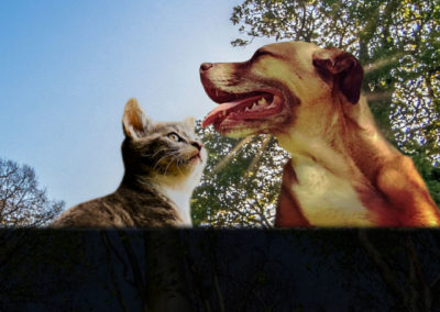 Dog And Cat - Operation Pets