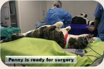 Ready-For-Surgery-14
