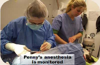 Anesthesia-17