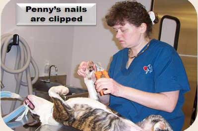 Operation-Pets-Nail-Clipping-9