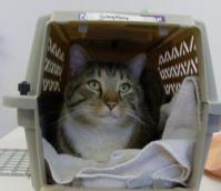 Operation Pets - What to Bring to your Cat Appointment for spay / neuter surgery