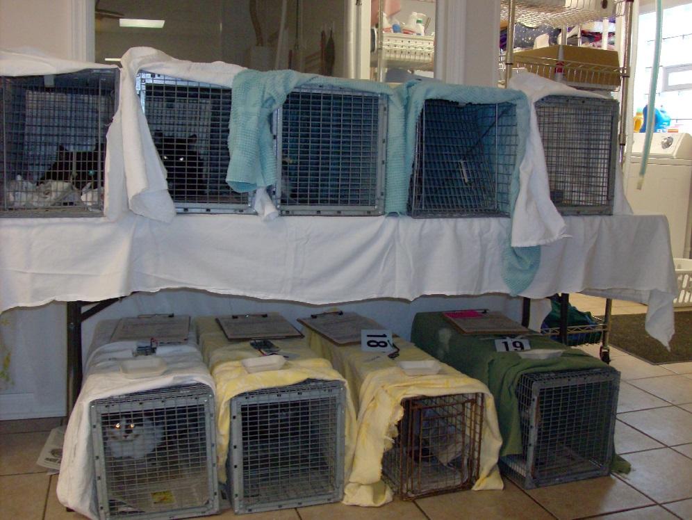 Feral Cat TNVR Program