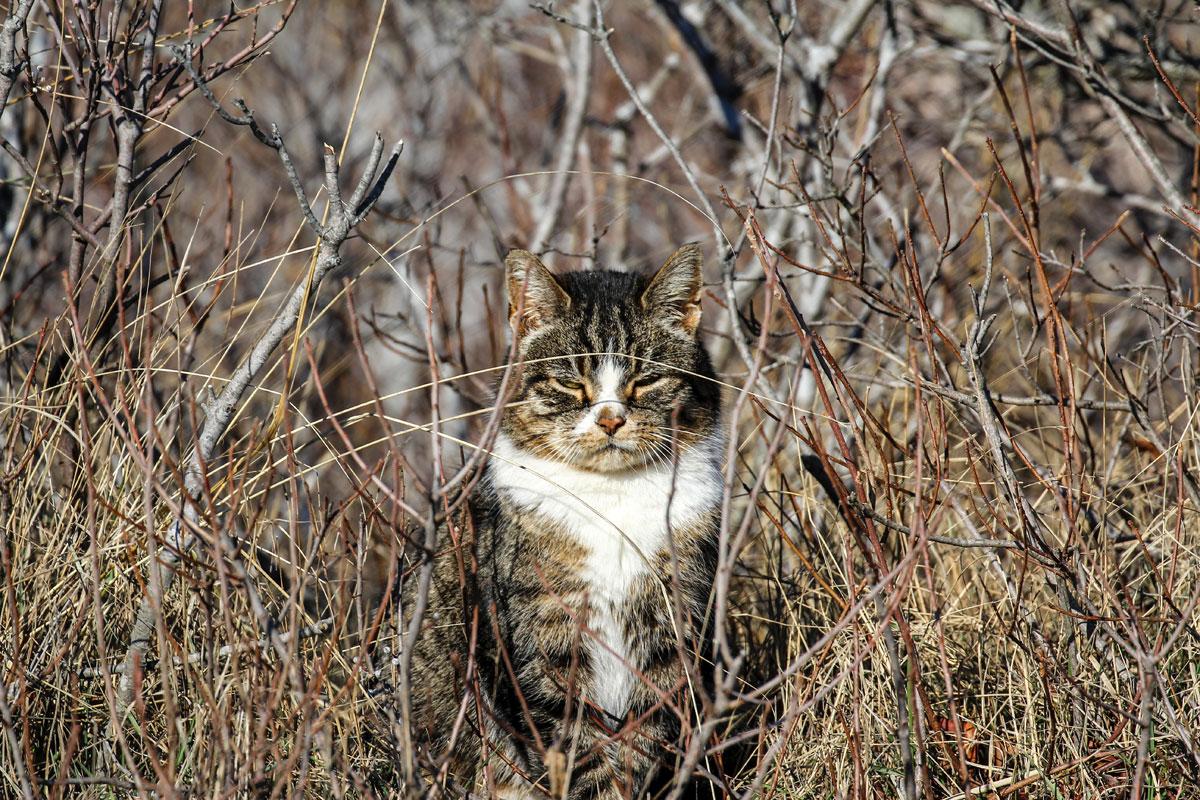 Help Spay/Neuter a Feral Cat